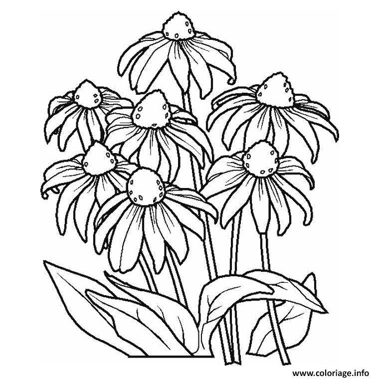 Coloriage fleur marguerite - JeColorie.com