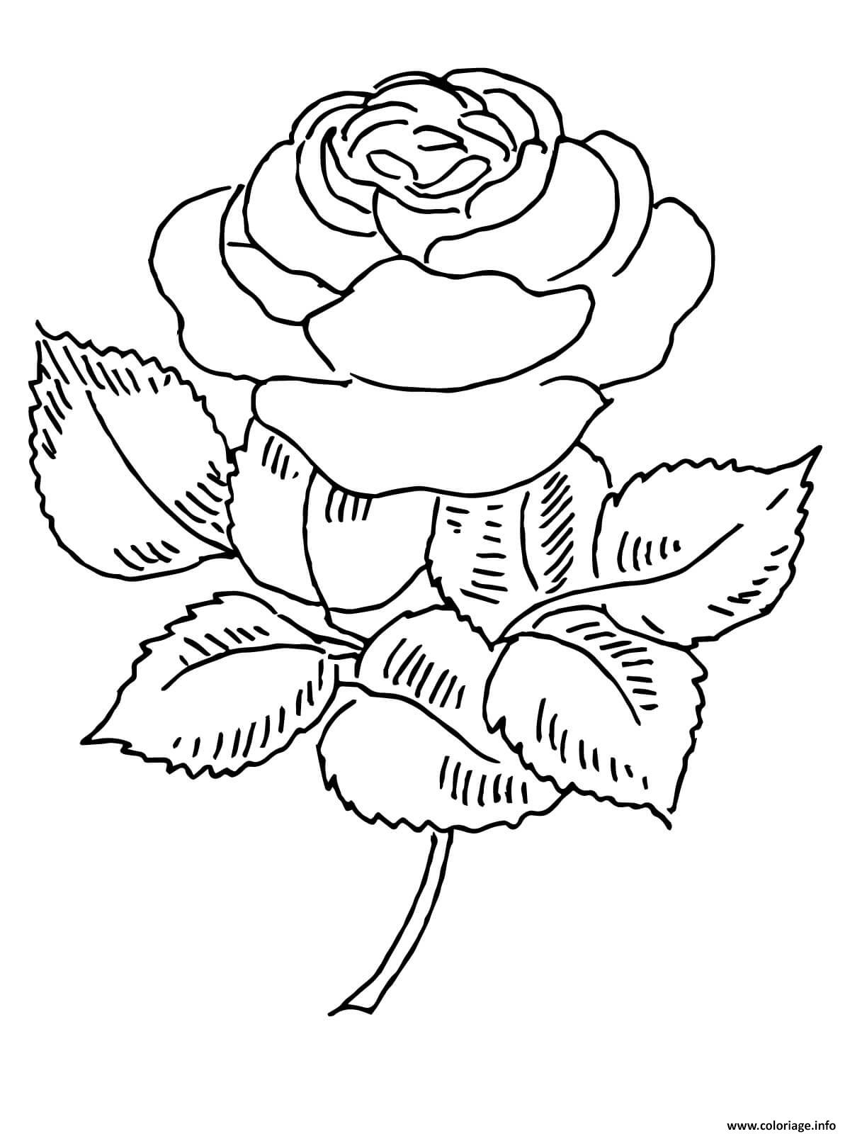 Coloriage Roses 130 dessin