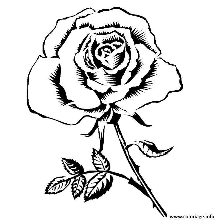 Coloriage Rose Adulte Dessin Rose à imprimer