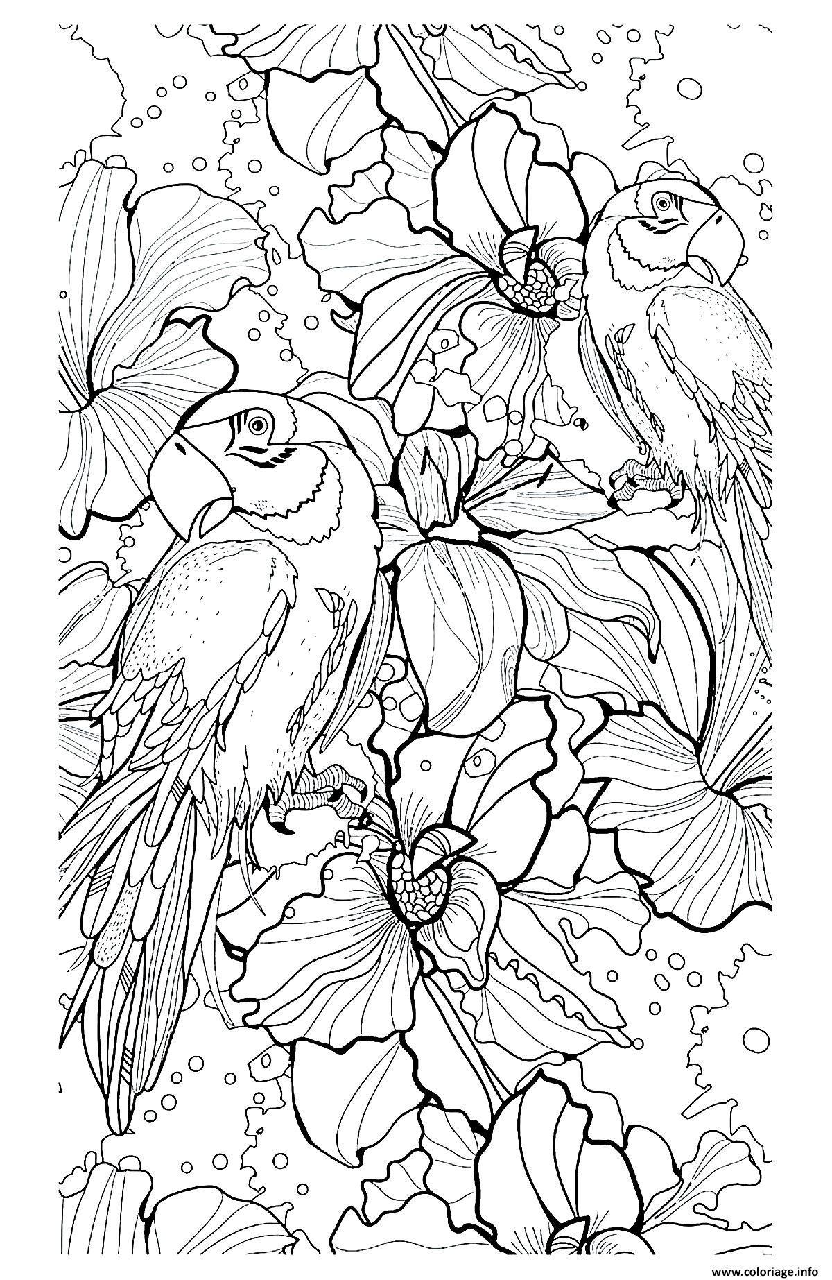 Coloriage adulte difficile perroquets   JeColorie.com