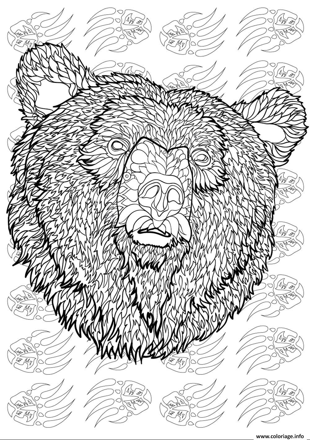 Coloriage ours adulte animaux antistress difficile dessin - Coloriage imprime ...