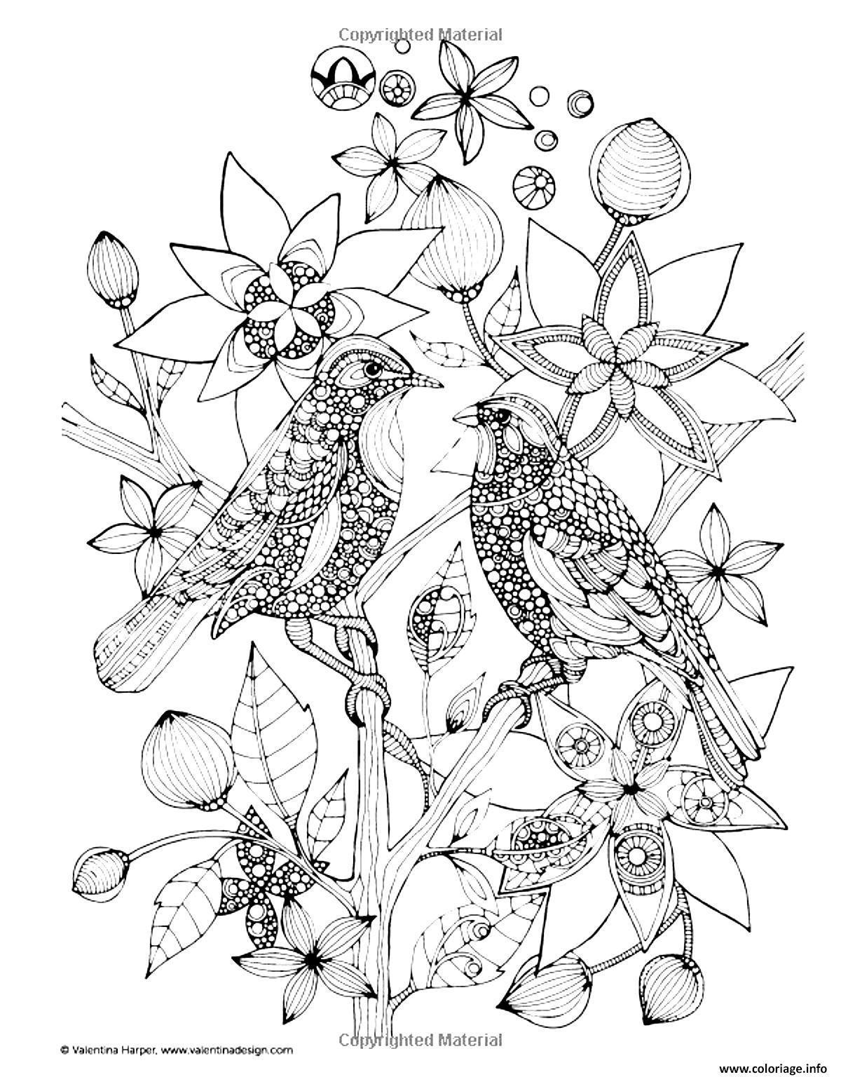 Coloriage Adulte Deux Oiseaux Sur Une Branche Dessin