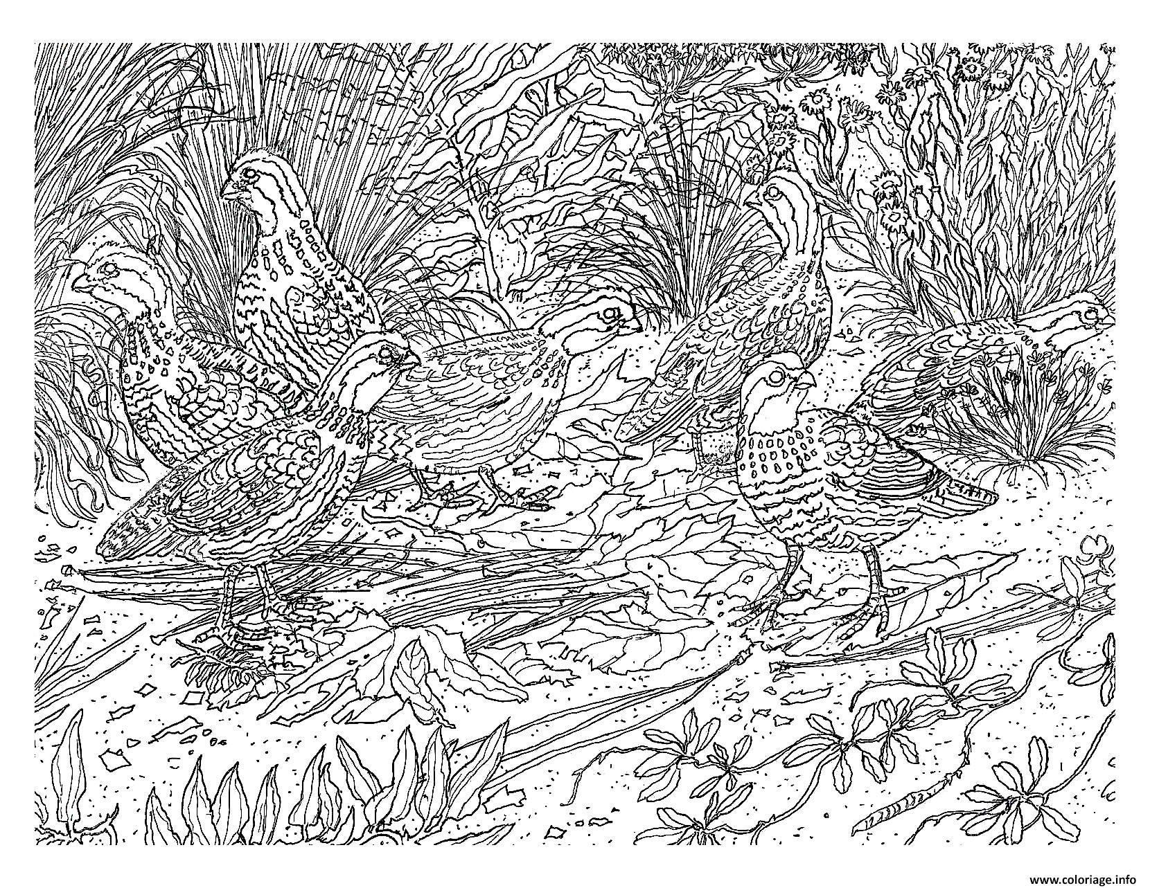 Coloriage difficile oiseau dessin - Coloriages adultes ...