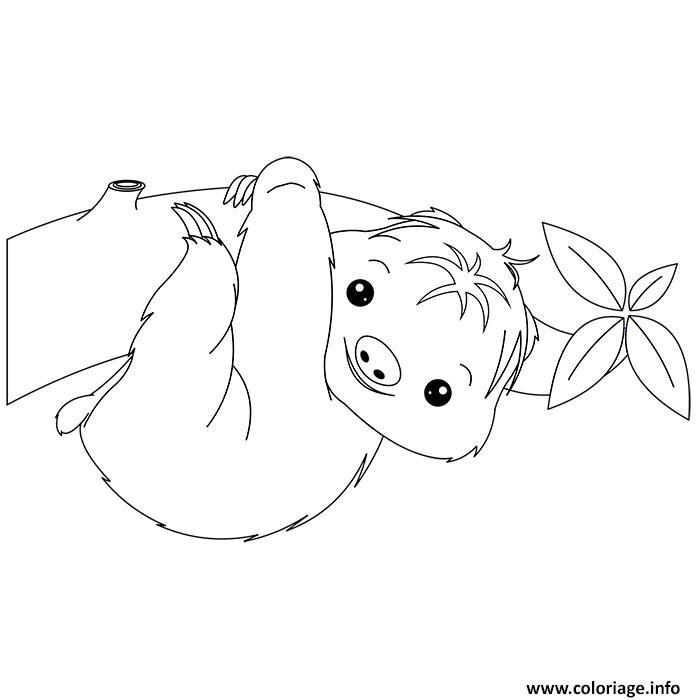 Coloriage animaux mignon de bebe paresseux dessin - Coloriage bebe animaux ...