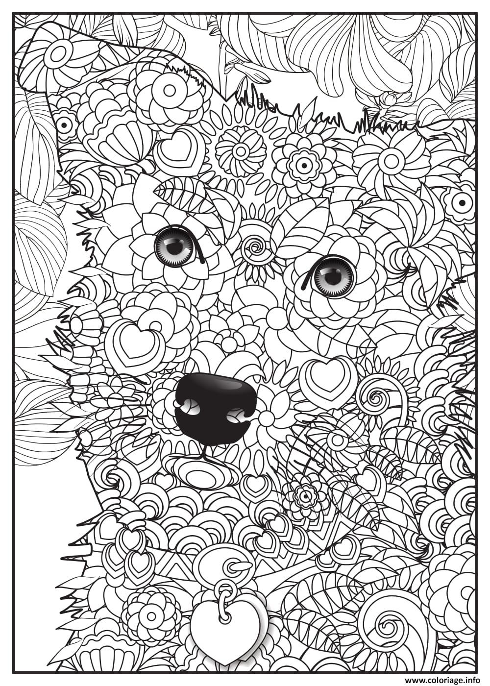 Coloriage chien border collie adulte animaux - Photo d animaux a imprimer gratuitement ...