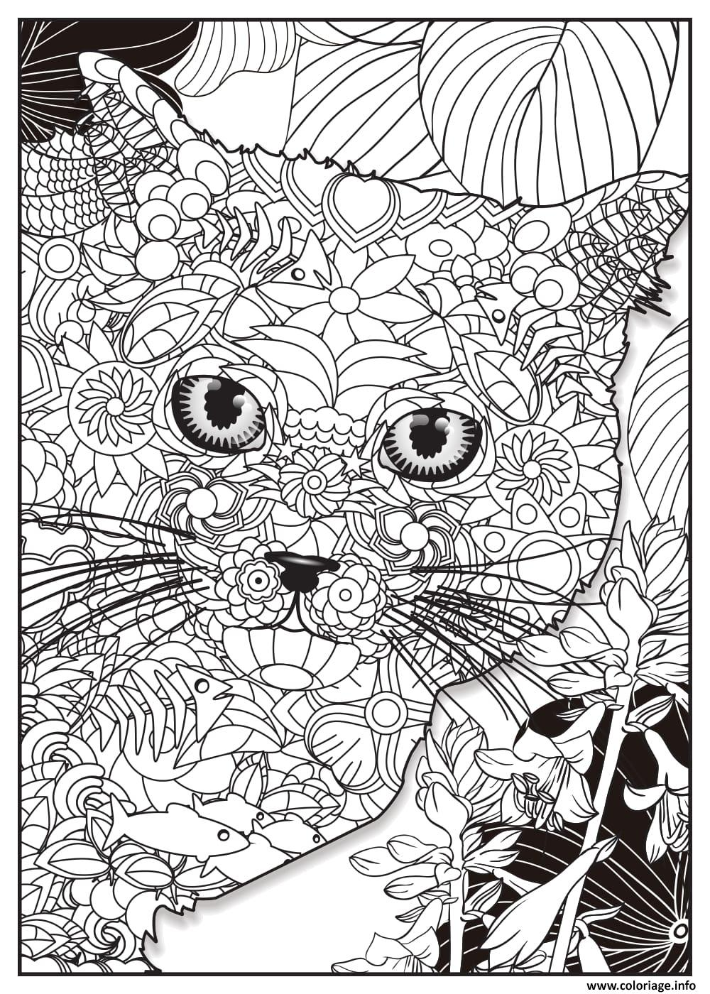 Coloriage Chat British Shorthair Adulte Animaux Dessin à Imprimer