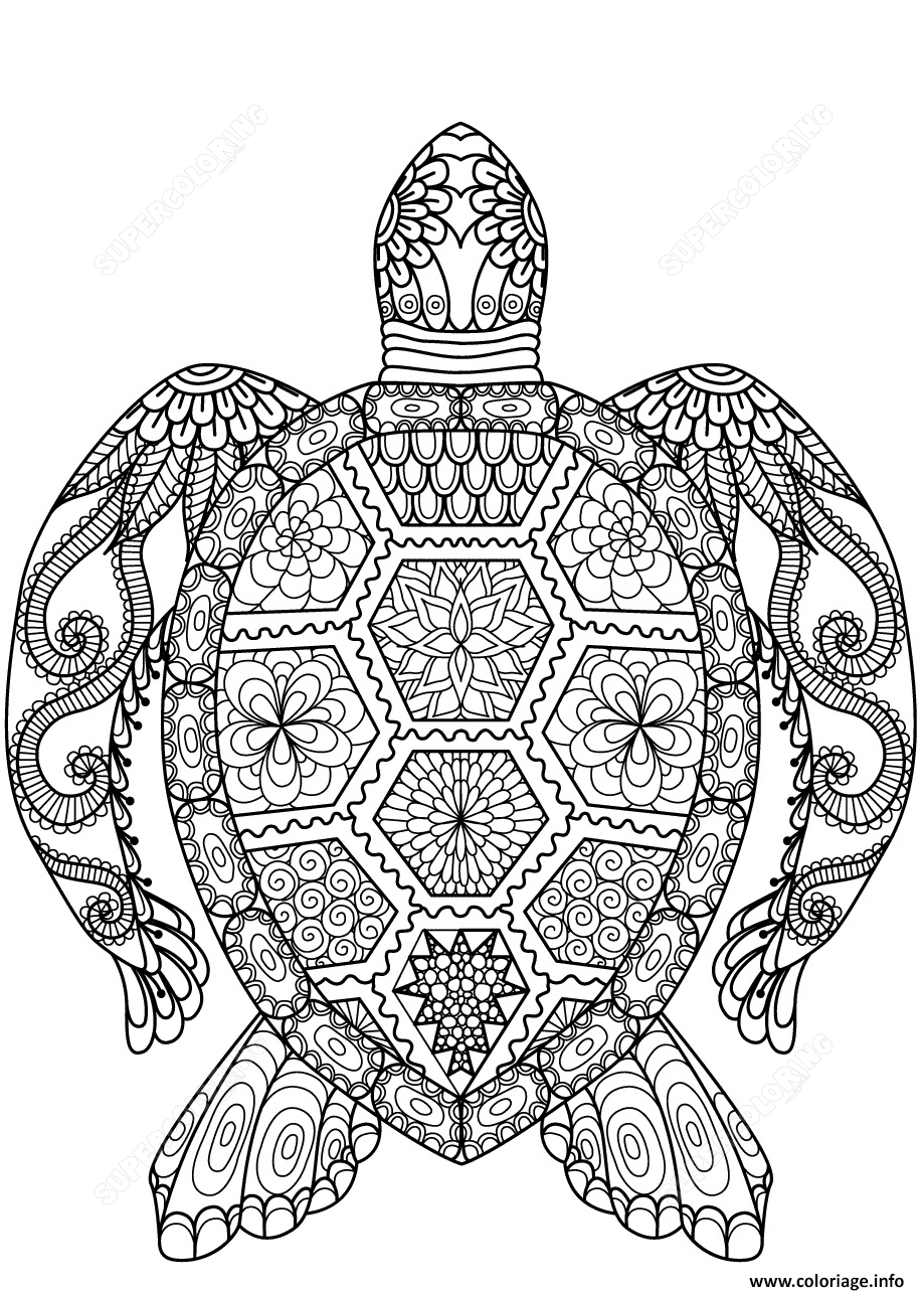 Coloriage Turtle Zentangle Adulte Dessin à Imprimer