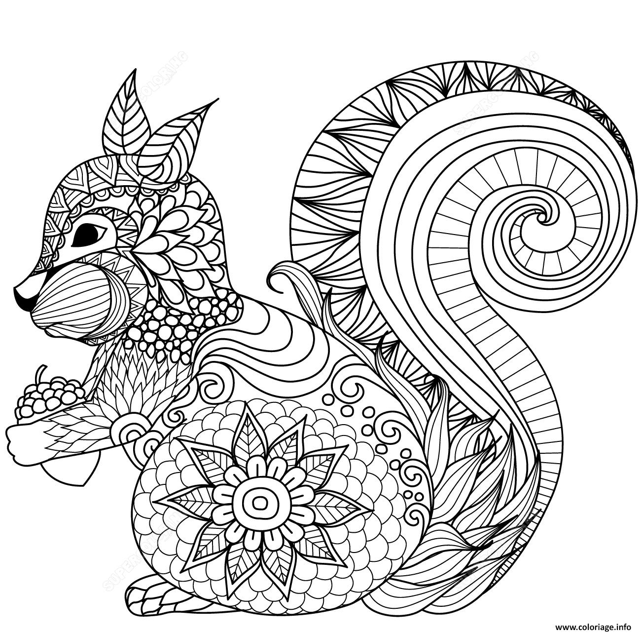 Dessin squirrel zentangle adulte_1 Coloriage Gratuit à Imprimer