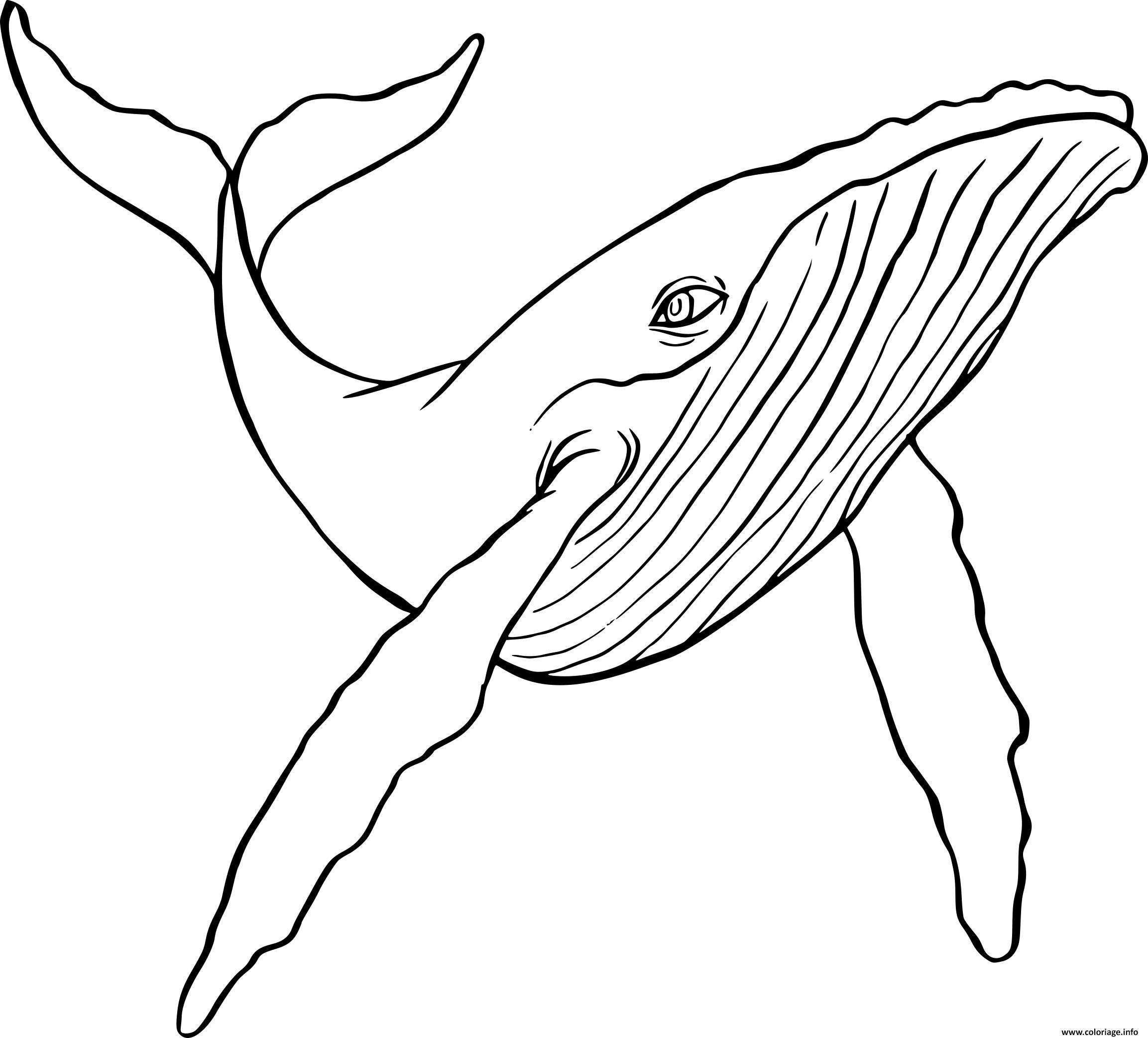 Dessin baleine a bosse Coloriage Gratuit à Imprimer