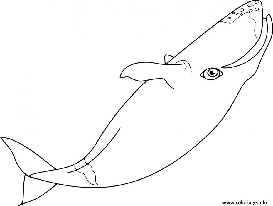 Dessin la baleine fait un saut Coloriage Gratuit à Imprimer