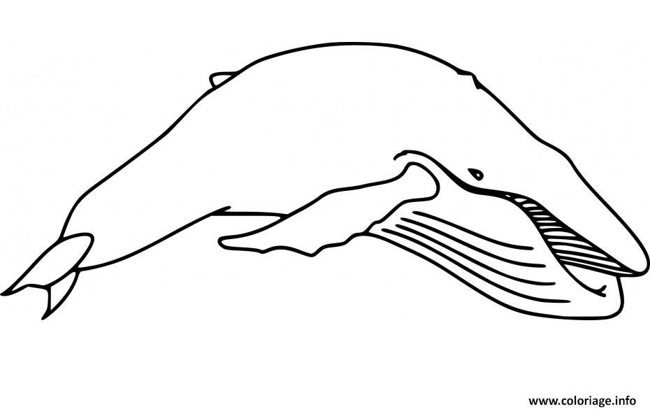 Coloriage Baleine Mandala.Coloriage Baleine A Bosse 2 Dessin