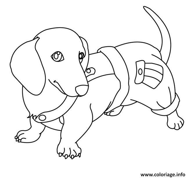 Coloriage magnifique chien saucisse - Coloriage magnifique ...