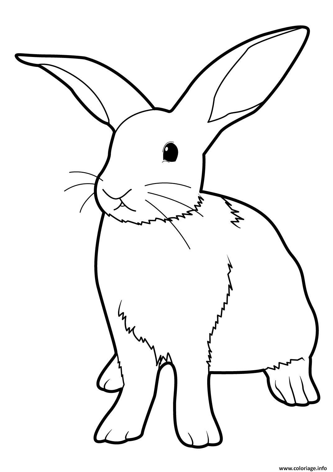 Coloriage lapin realiste debout dessin - Lapin en dessin ...