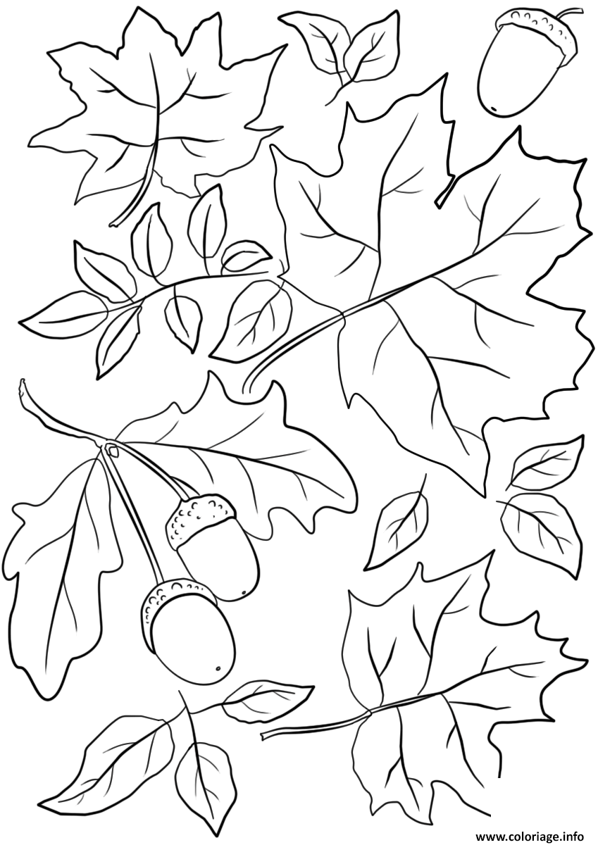 Coloriage Automne Feuilles And Acorns Fall Jecolorie Com
