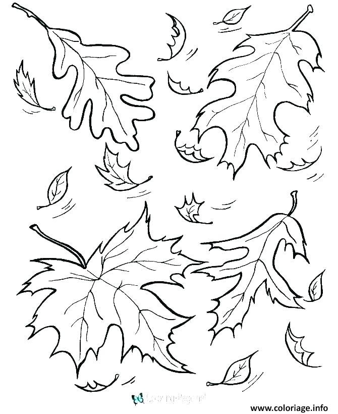 Coloriage Automne Feuilles Fall Jecoloriecom