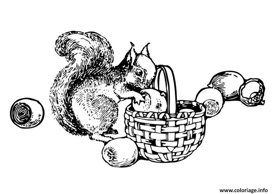 Dessin ecureuil aime les noix Coloriage Gratuit à Imprimer
