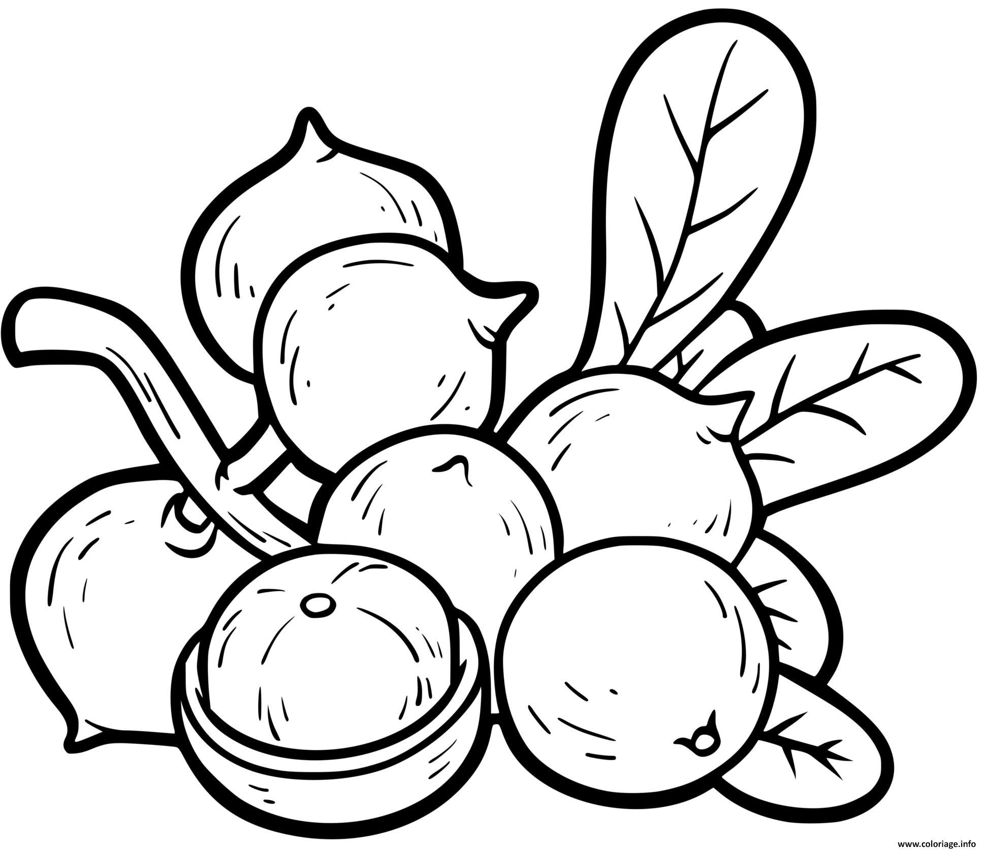 Dessin noix de macadame Coloriage Gratuit à Imprimer