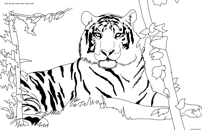 Coloriage Tigre Afrique Dans Son Habitat Naturel Jecolorie Com