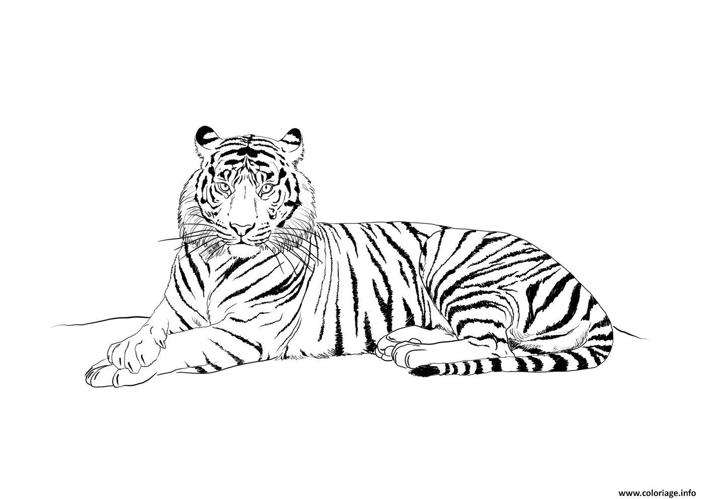 Dessin tigre mammifere carnivore realiste Coloriage Gratuit à Imprimer