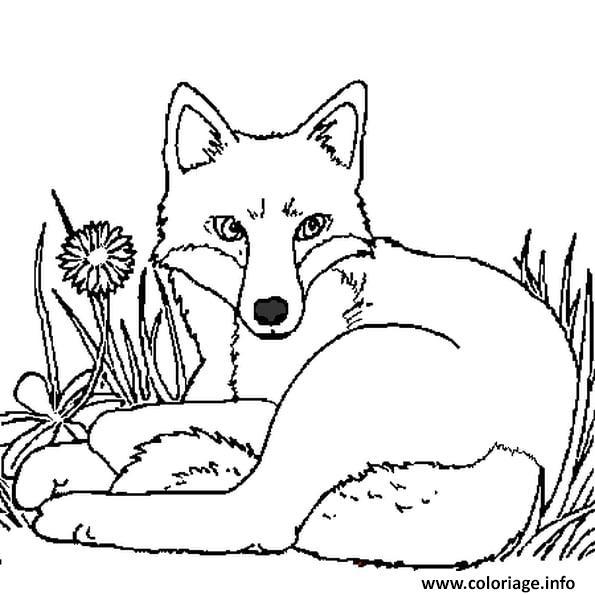Dessin renard tranquille dans la foret Coloriage Gratuit à Imprimer