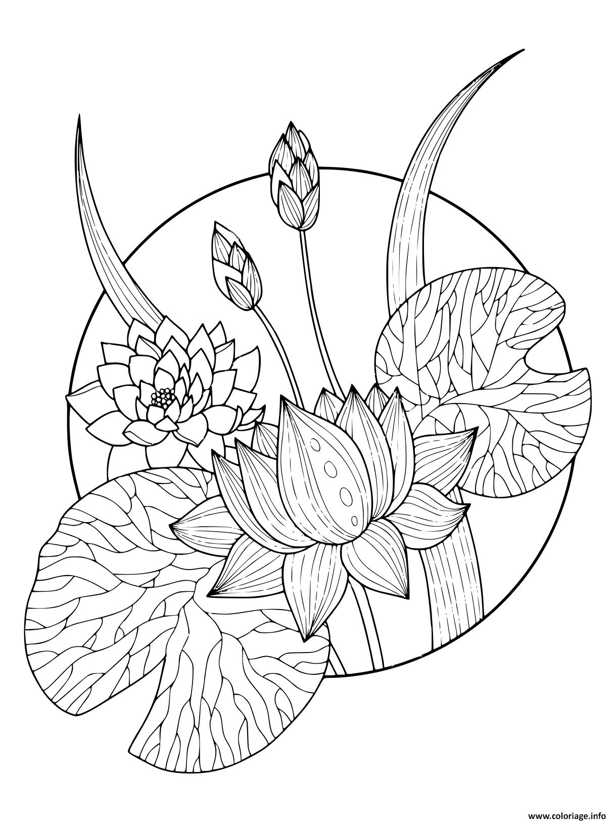 Dessin magnifique fleurs lotus Coloriage Gratuit à Imprimer