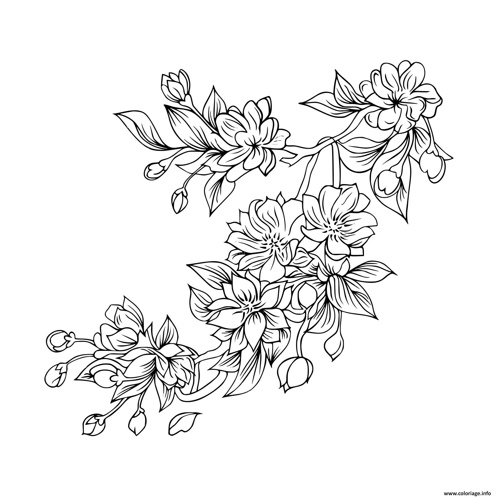 Dessin sakura fleurs japonaise Coloriage Gratuit à Imprimer