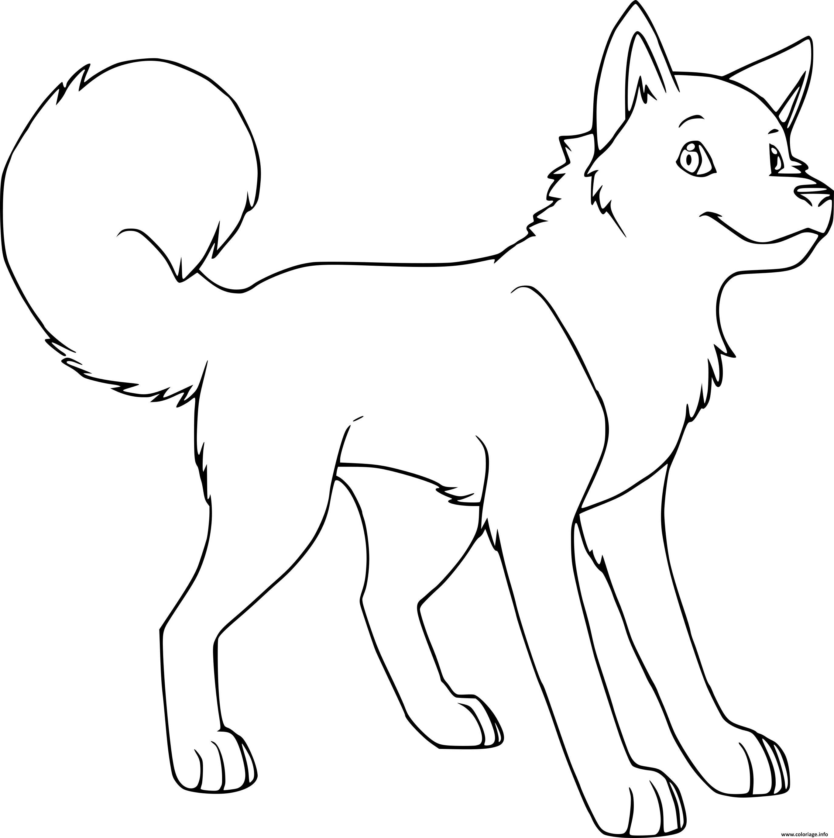 Coloriage Chien Husky Adorable dessin
