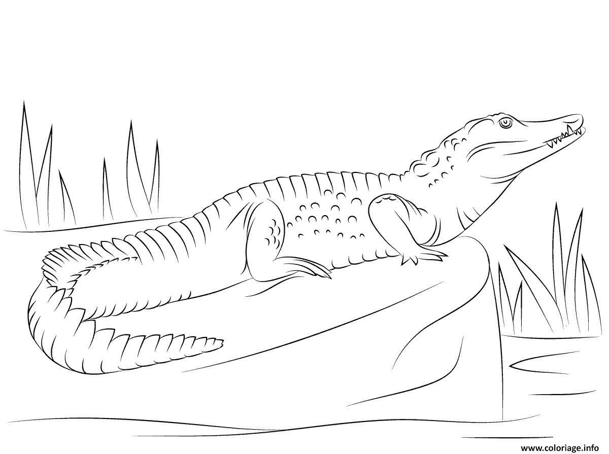 Dessin crocodile du nil de profil Coloriage Gratuit à Imprimer