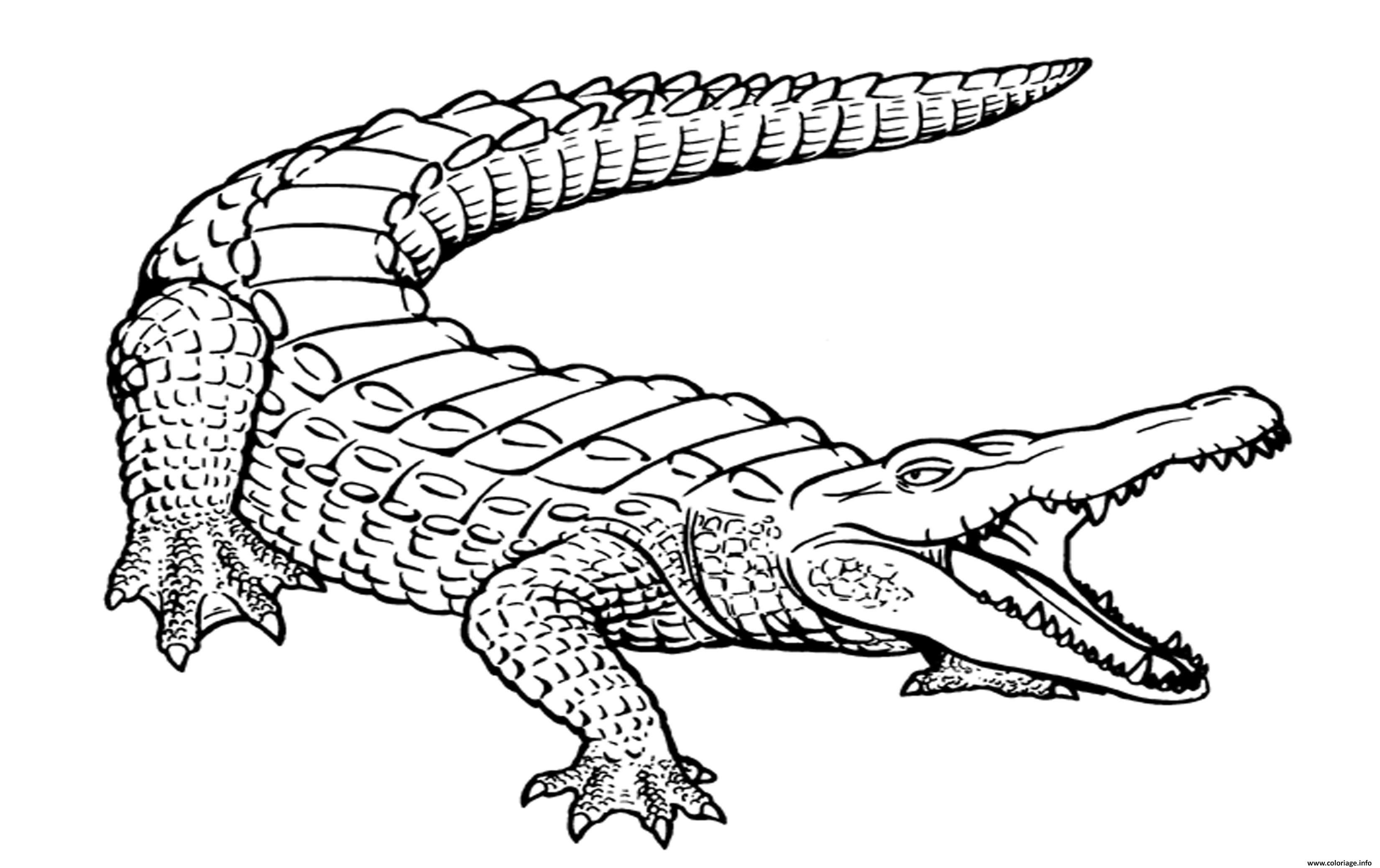 Coloriage Crocodile Marin Realiste Avec La Bouche Ouverte