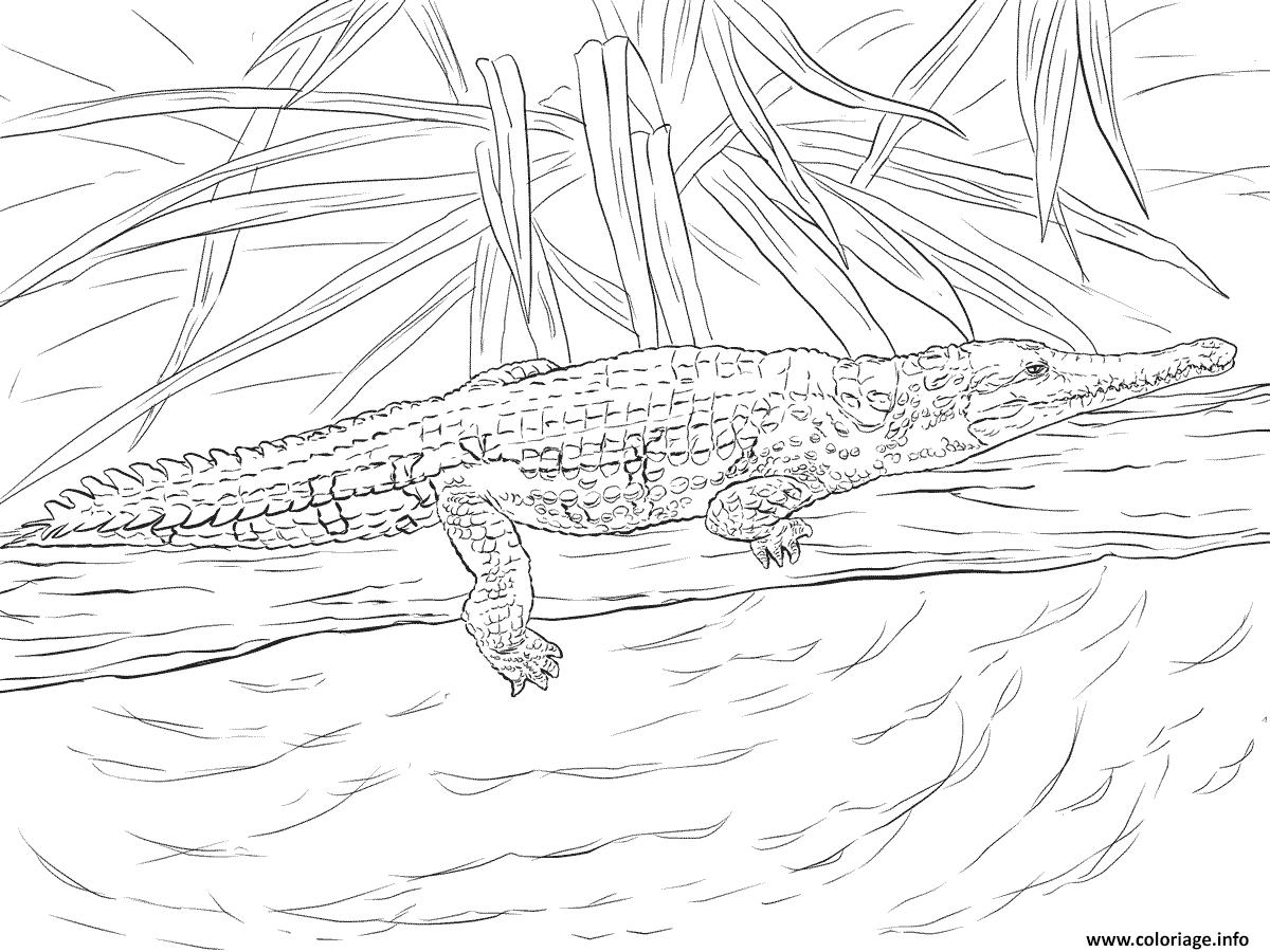 Dessin crocodile de johnston Coloriage Gratuit à Imprimer