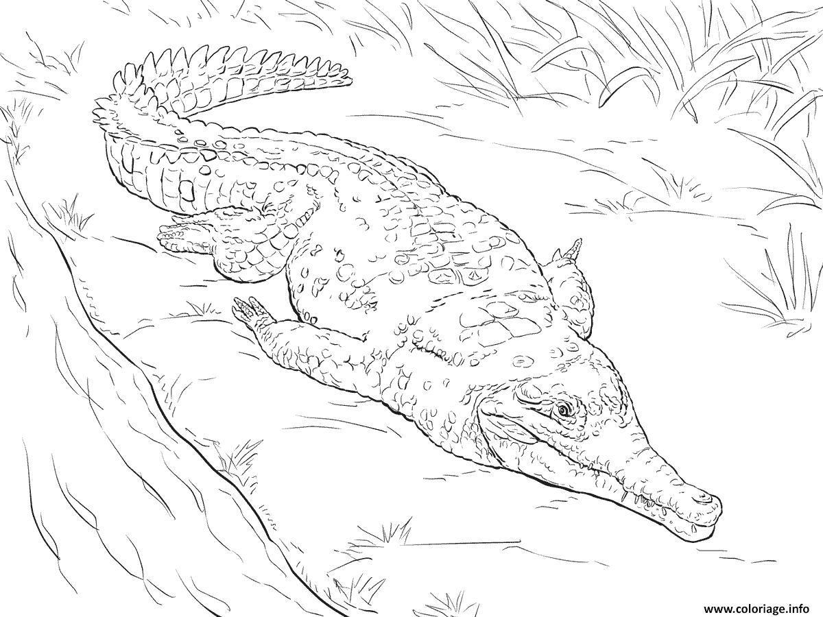 Dessin crocodile de lorenoque Coloriage Gratuit à Imprimer