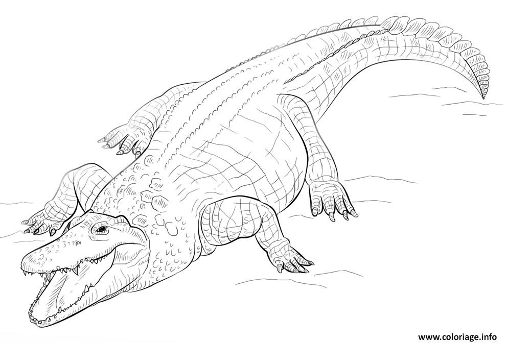 Dessin crocodile du nil tres feroce Coloriage Gratuit à Imprimer