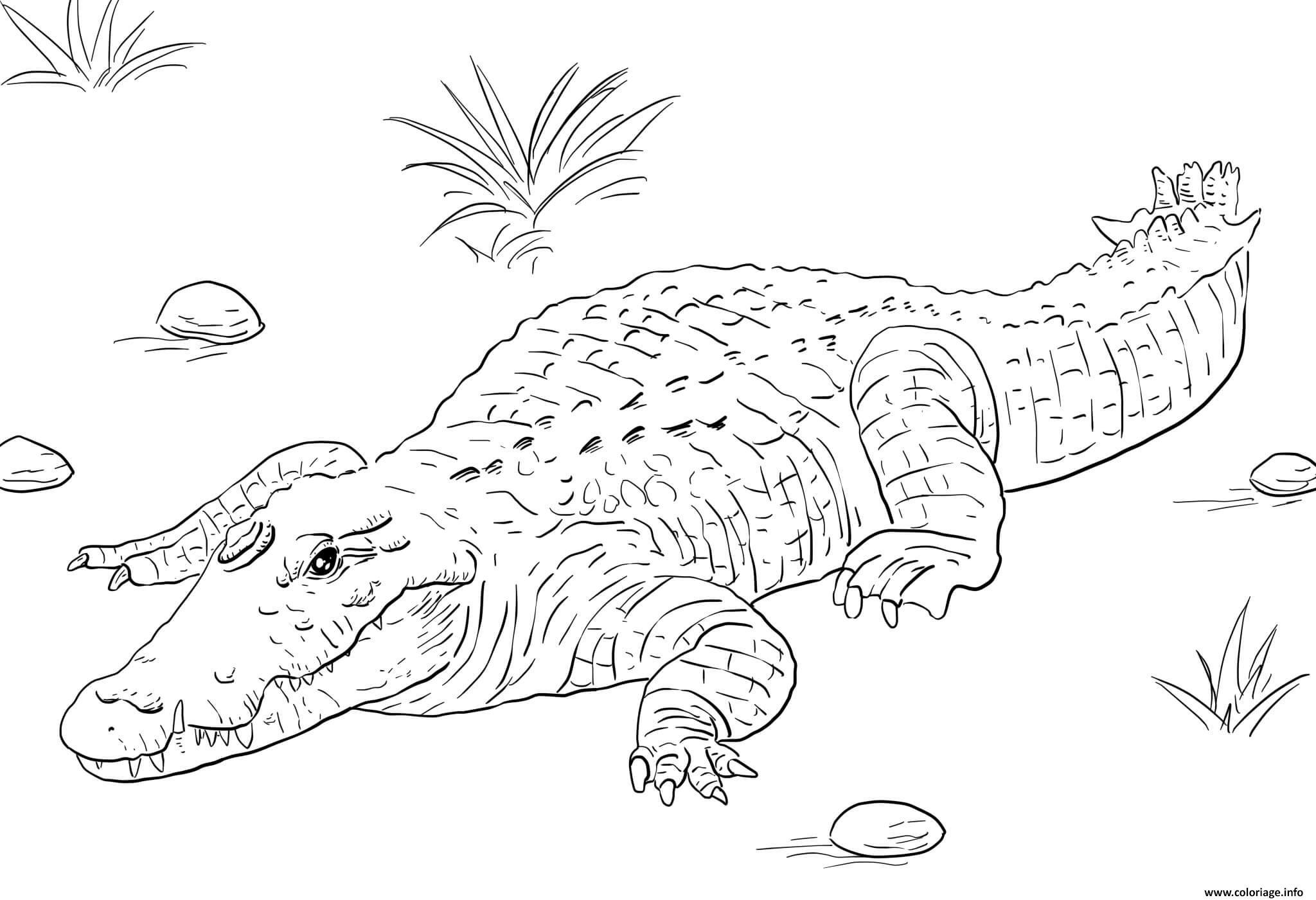 Dessin afrique nile crocodile Coloriage Gratuit à Imprimer
