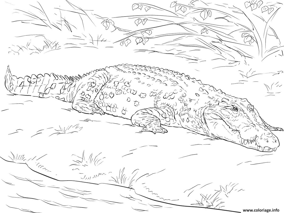 Dessin crocodile marin daustralie realiste Coloriage Gratuit à Imprimer