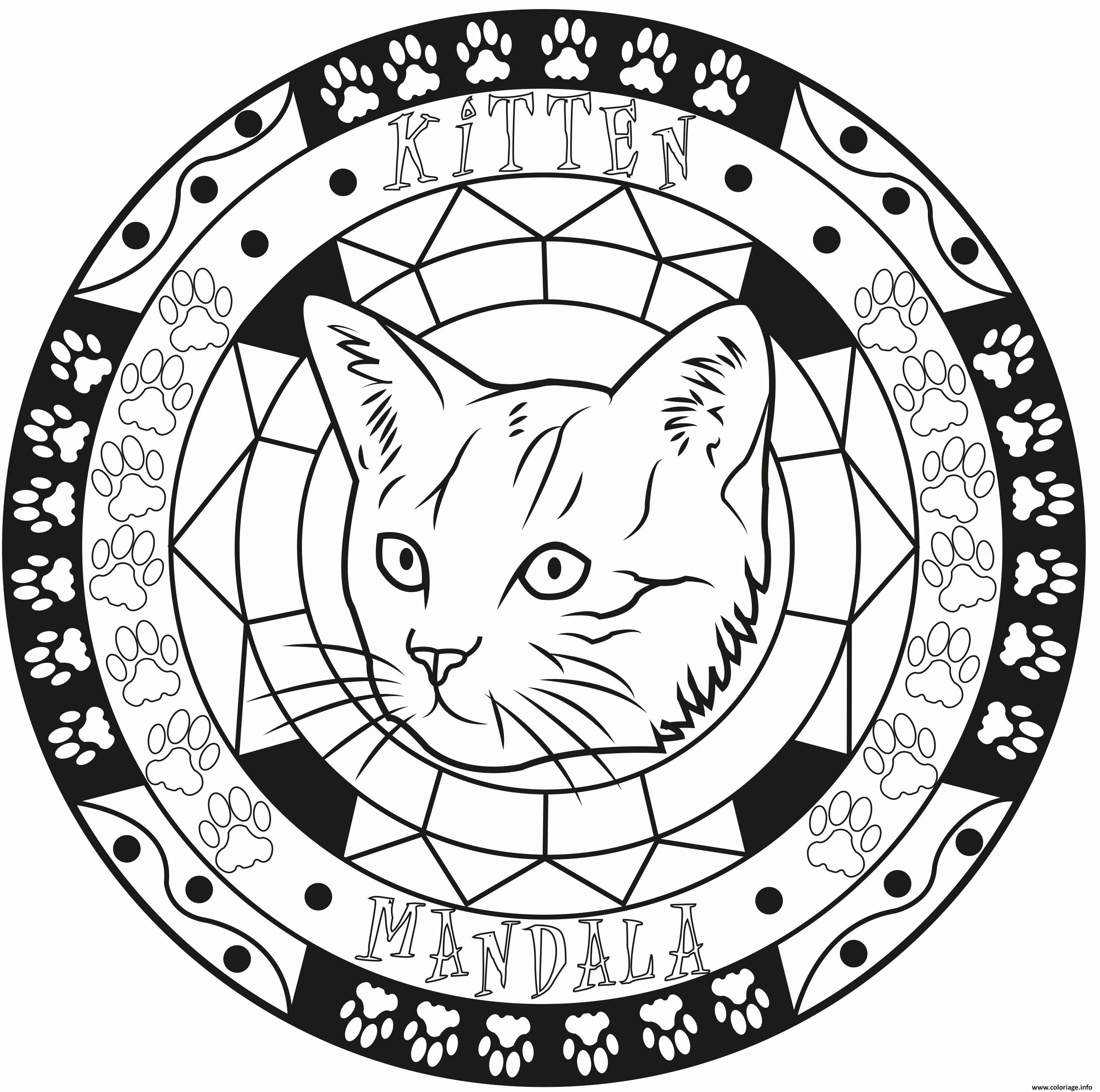 Coloriage Adulte Mandala Elegant Chat Kitten Dessin Mandala A Imprimer