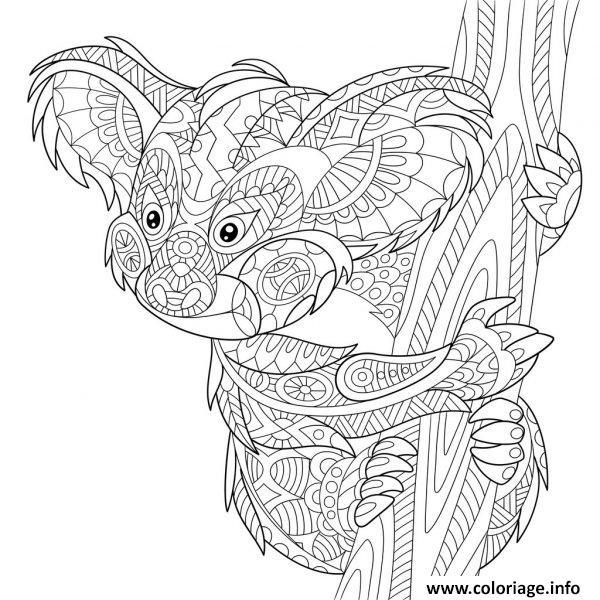 Coloriage Koala Australie Zentangle Antistress Jecolorie Com