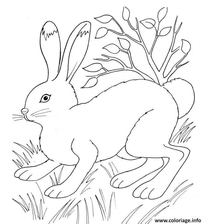 Dessin lapin dans la nature pres de la vegetation Coloriage Gratuit à Imprimer