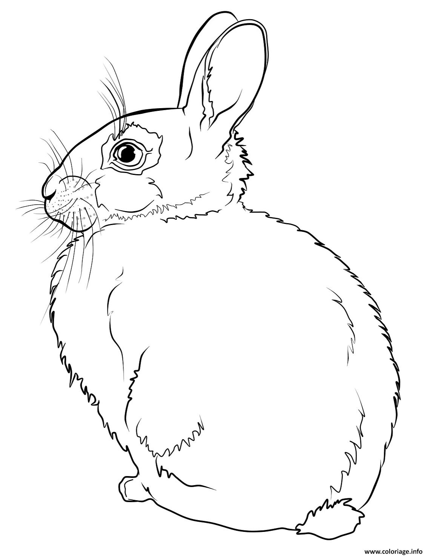 Dessin lapin realiste de dos Coloriage Gratuit à Imprimer