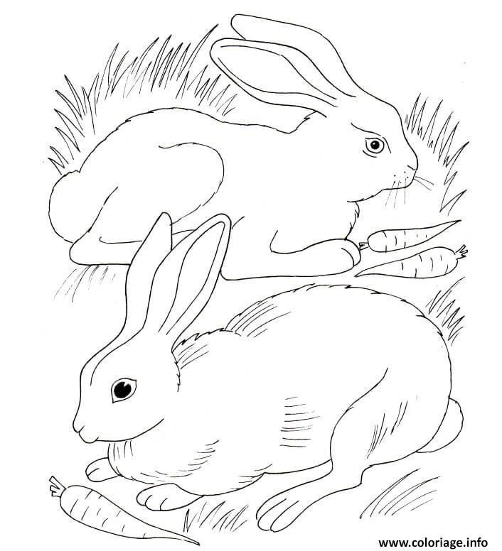 Dessin lapin et lapina mangent des carottes Coloriage Gratuit à Imprimer