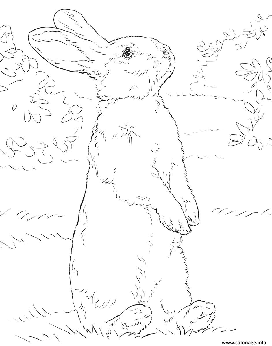 Dessin animaux lapin realiste Coloriage Gratuit à Imprimer