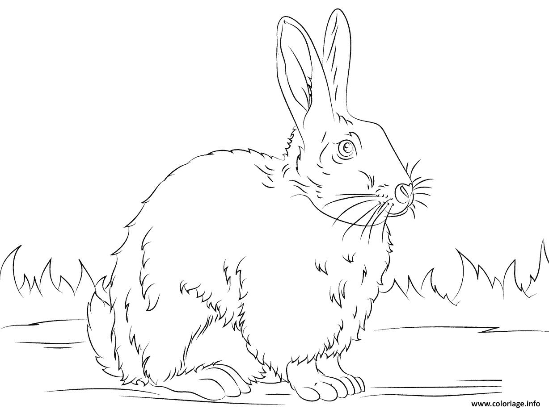 Dessin cute lapin vrai realiste noir et blanc Coloriage Gratuit à Imprimer