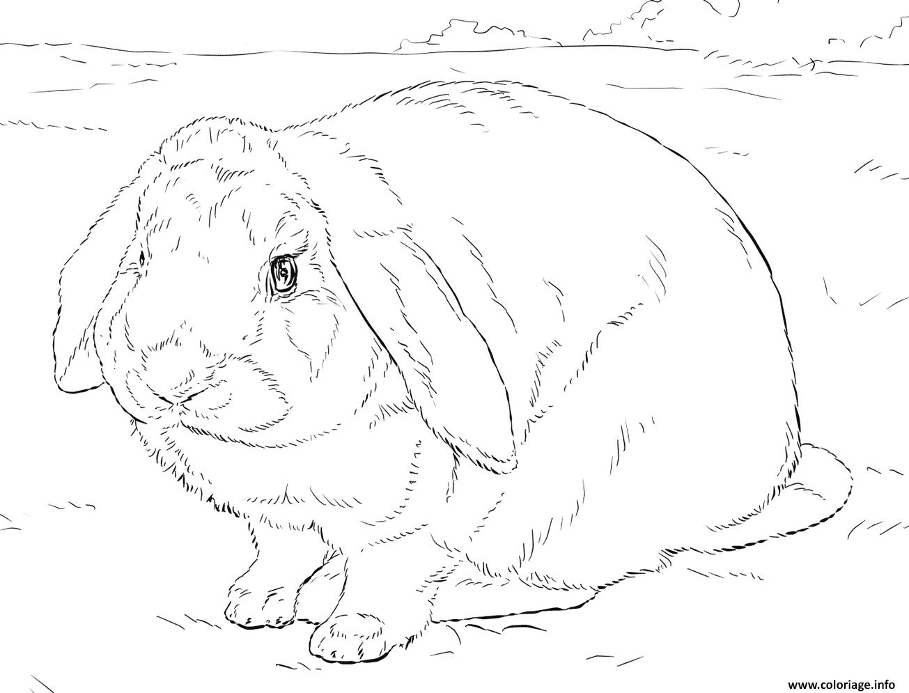 Dessin realiste lapin Coloriage Gratuit à Imprimer