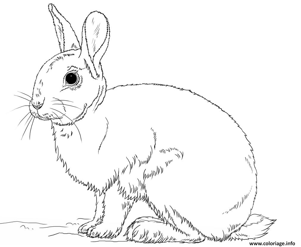 Dessin beau lapin realiste Coloriage Gratuit à Imprimer