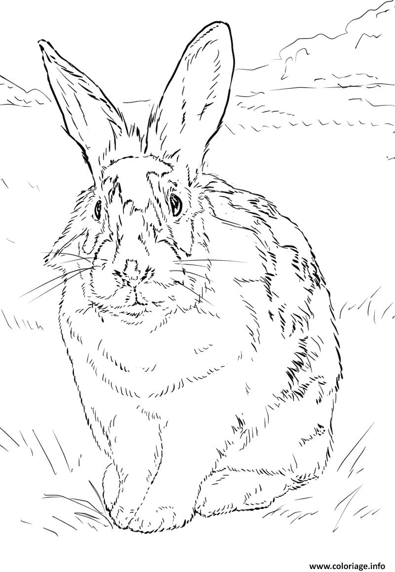 Dessin lapin relaiste dans un environnement naturel Coloriage Gratuit à Imprimer