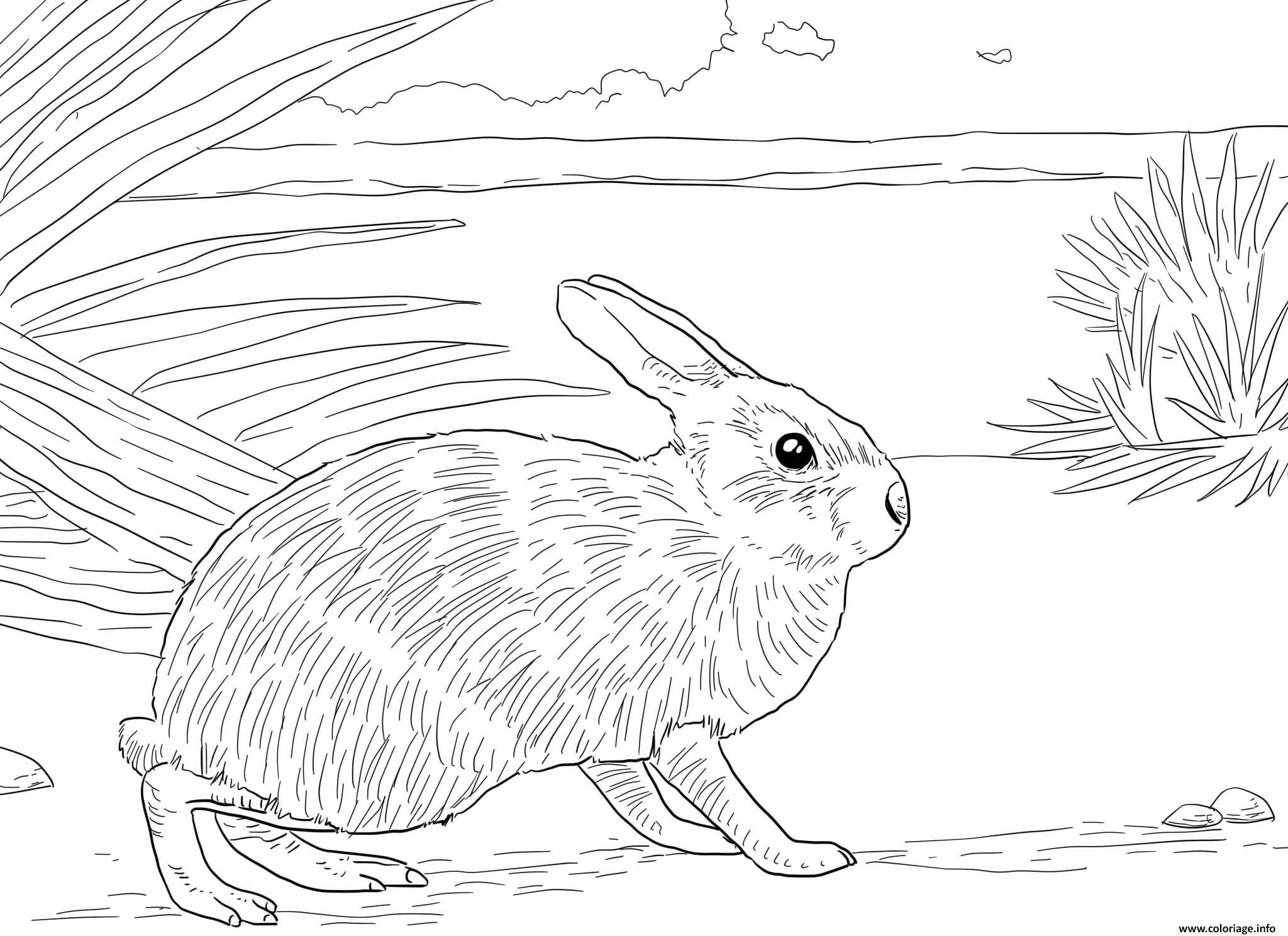 Dessin nautre lapin realiste Coloriage Gratuit à Imprimer