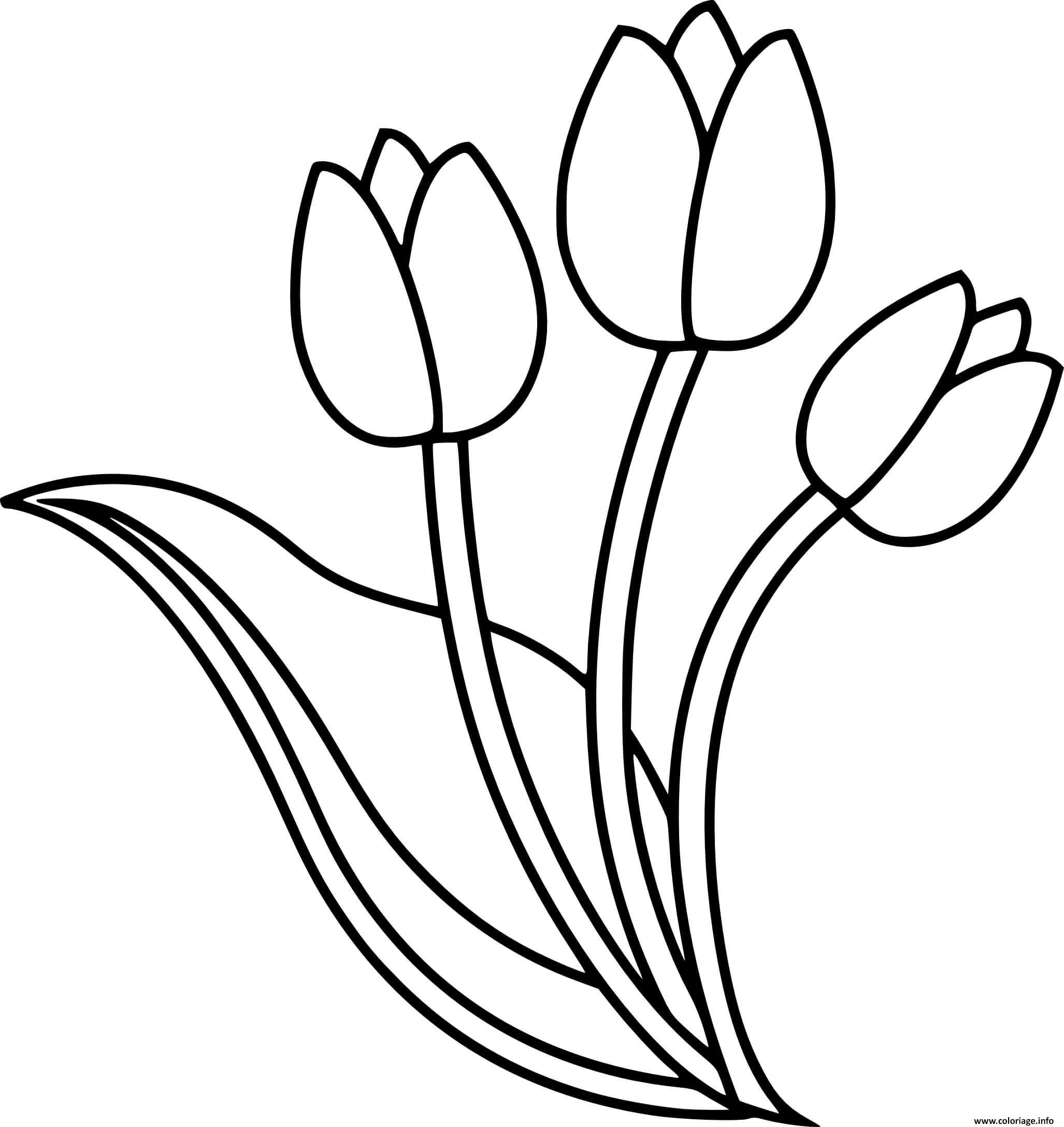 Dessin trois fleurs tulipes Coloriage Gratuit à Imprimer