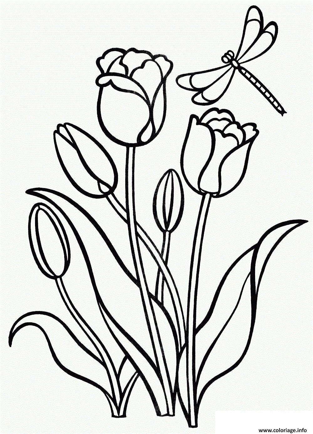 Dessin tulipe fleur clusiana Coloriage Gratuit à Imprimer