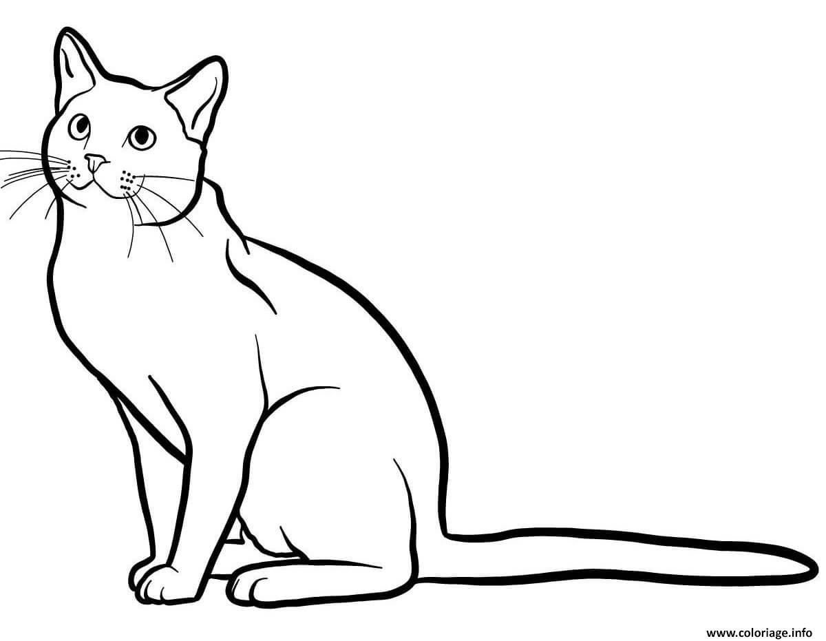Coloriage Bleu russe est un chat originaire des pays scandinaves ...