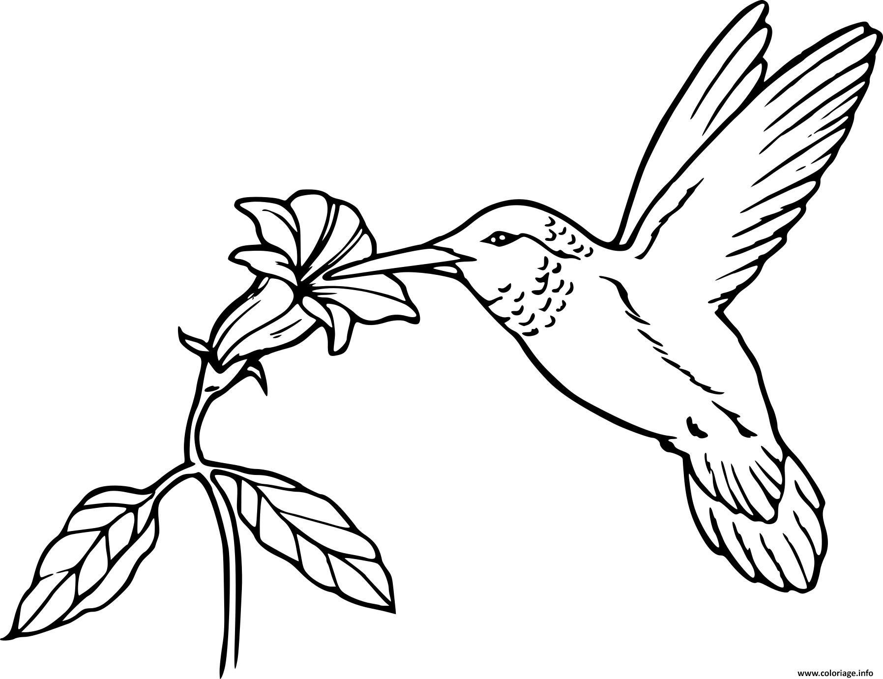 Dessin oiseau en vol nourriture fleur Coloriage Gratuit à Imprimer