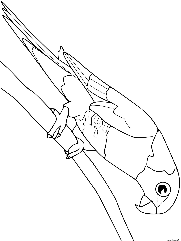 Dessin lorikeet arc en ciel oiseau Coloriage Gratuit à Imprimer
